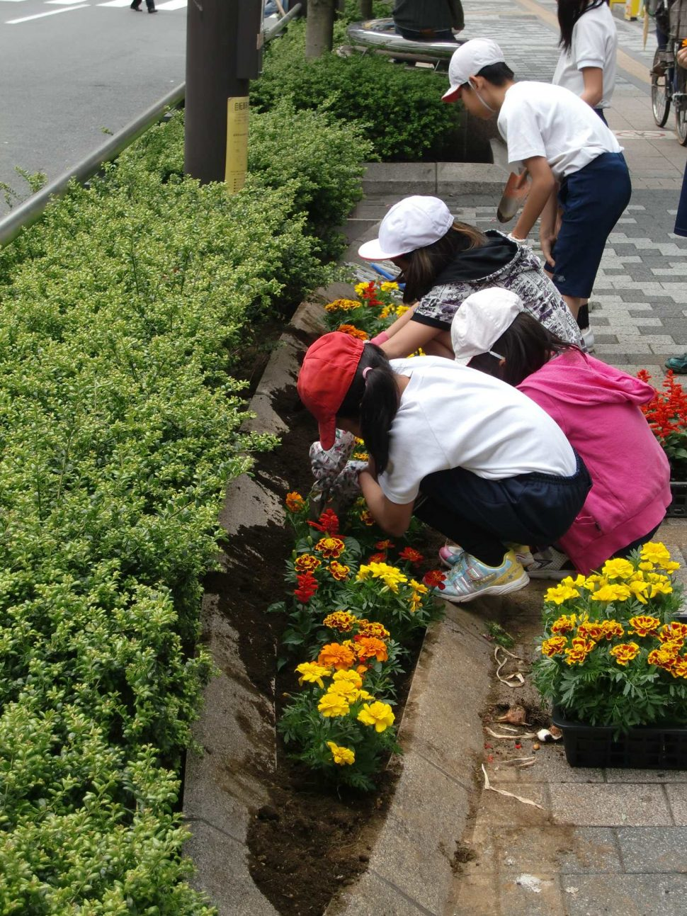 シンボルロード花壇の管理3