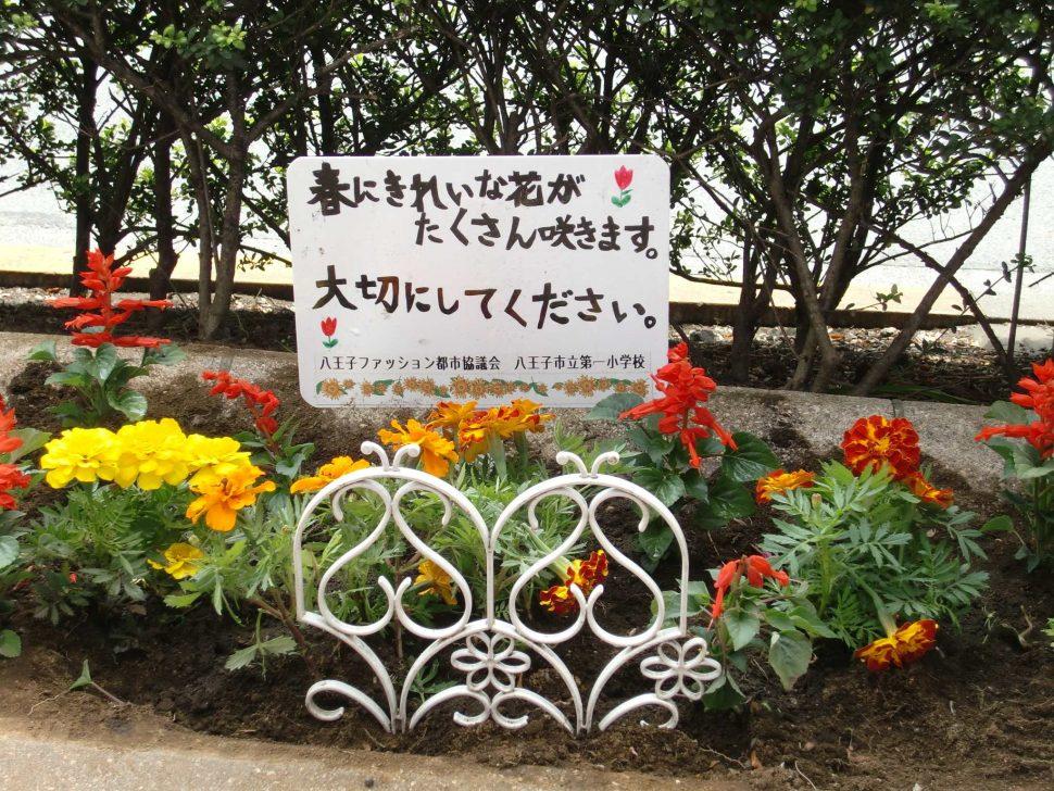 シンボルロード花壇の管理2
